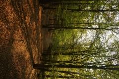 u nature (7)